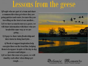 Geese Quotes