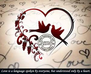 lovequotes-love-Romance-quotes-romantic-quote-love-photos-roses ...