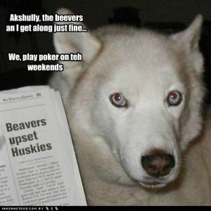 funny dogs with Quotes-Funny Dogs- funny dog pictures with Quotes,