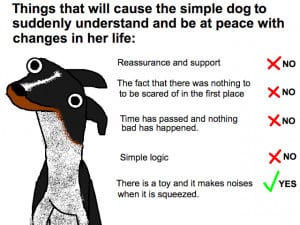 Dogs Don't Understand Basic Concepts Like Moving