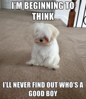 Funny Cute Animals .... I Love You Too Tiny Human