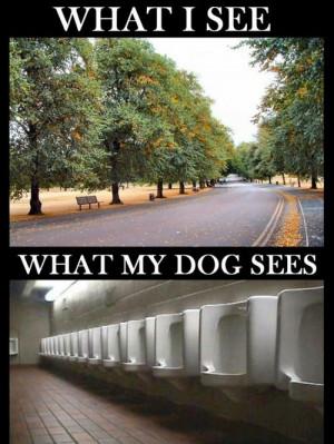 Doggie vision