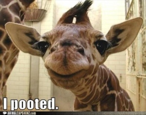 baby giraffe, funny pictures