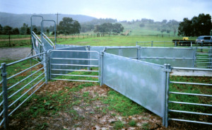 Permanent Yards Sheep