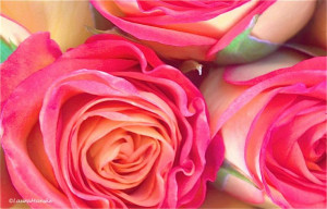 ... Eberhard Arnold Happy Mother's Day! Enjoy 25 Loving Quotes & Luscious