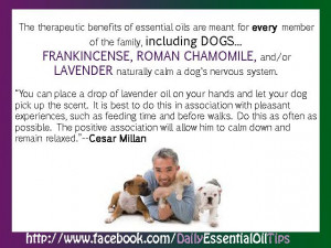 ... : http://www.essentialoilpro.net/essential-oils-for-your-dog/ Like