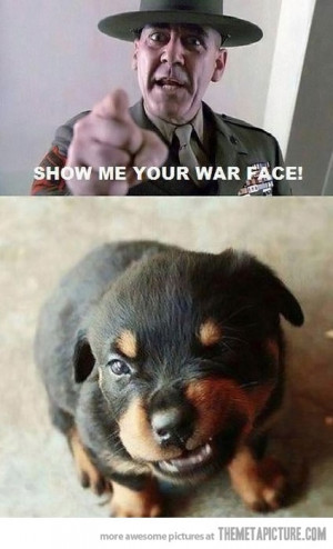 Funny photos funny cute puppy angry face