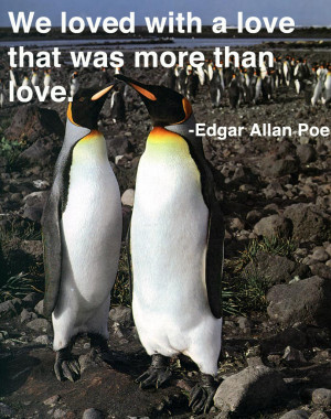 ... times are tough penguins present love quotes penguins in love quotes
