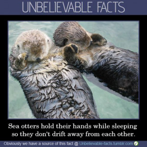 ... Holdhand, Seaotter, Did You Know, Sleep, Sea Otters, So Sweet, Animal