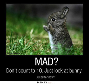 funny angry cute bunny