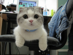 40 pictures of funny cats, funny cat pictures, cat pictures, cute cats