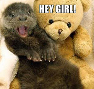 Funny Pictures Otters Nails