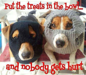 LOL dogs: Put the treats in the bowl...and nobody gets hurt