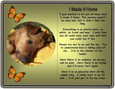 made it home ~ loss of pet great to give to kids when they lose a ...