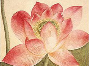 The Lotus Flower (in German)