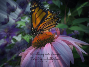 Butterfly Poems and Sayings