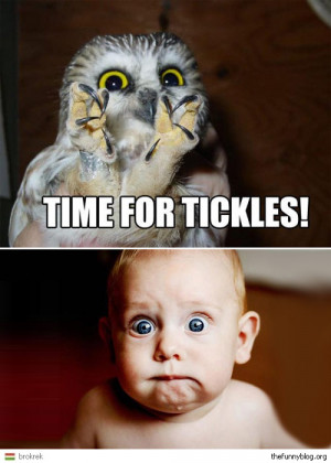 funny-owl-funny-baby-tickle-blog-picture-for-facebook-thefunnyblog.jpg