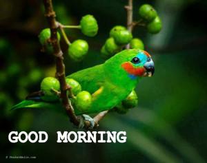 Good Morning 79