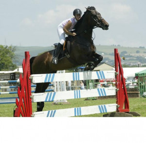 Horse Show Jumping Quotes Horse directory - show jumping