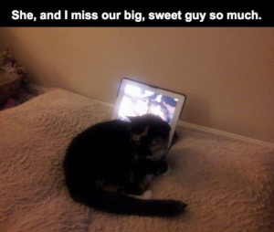 ... RIP best friends sadness bff sad story rest in peace dogs and cats