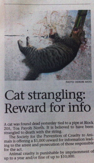 Posted Singapore Munity Cats