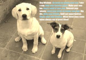 Dog Quotes Love Loyalty Dog wisdom