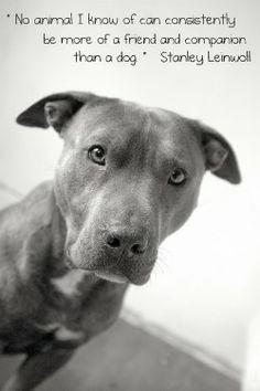... dogs quotes best friends pit bull dogs pet pitbull so true baby dogs