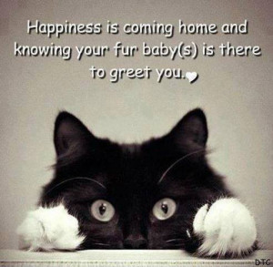Happiness Is Coming Home and Knowing Your Fur Baby is there to Greet ...