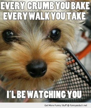 stalker scary dog animal crumb bake step take watching you funny pics ...