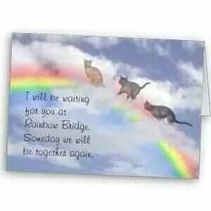 ll be waiting for you at Rainbow Bridge ... kitty cats