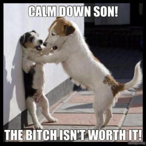 Funny dogs – Calm down son