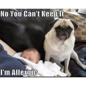 Damn allergies...