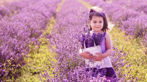 Wallpaper: Lavender Flowers Background