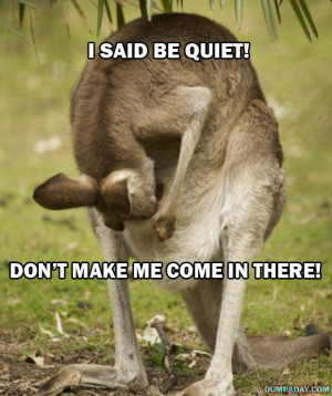 funny kangaroo keep it down don't make me come in there