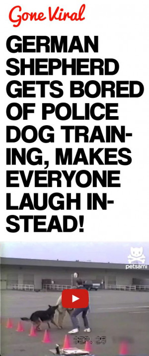 ... Dogs, German Shepherd, Police Dogs, Animal, Funnies Police, Dogs Bones