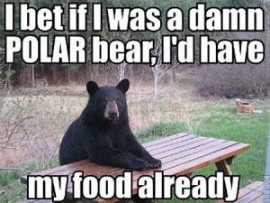 Funny Bear Image