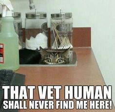 vet more veterinary medicine cat hiding dem cat funny cat clinic ...