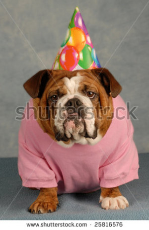 Stock Photo Birthday Dog
