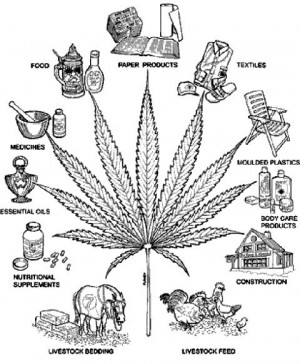 FUNNY WEED Image
