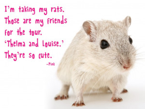 taking my rats. Those are my friends for the tour. Thelma and ...