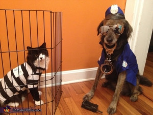 Cat burglar and police dog