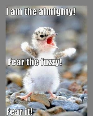 Funny Images Of Animals With Sayings