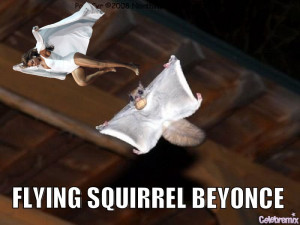 Flying Squirrel Beyonce