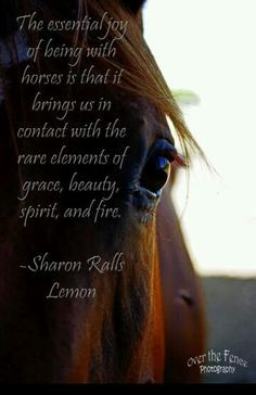 Horse quote -Love this picture! More