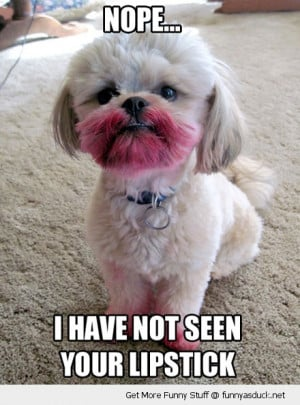 lipstick dog animal haven't seen red funny pics pictures pic picture ...