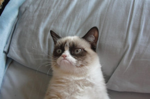 Cat of the Week #10: Tard, the grumpy cat.