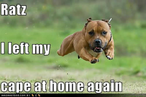Funny Pit Bull Pictures