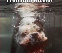 bull-dog-cute-dog-finding-nemo-funny-quote-106404.jpg
