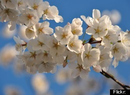 ... birdies is? //Spring Equinox: Quotes To Mark The First Day Of Spring
