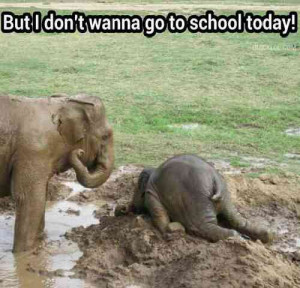 An Elephant Tantrum